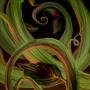 giant_web_of_vines.jpg