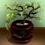 lucky_bonsai_tree.jpg